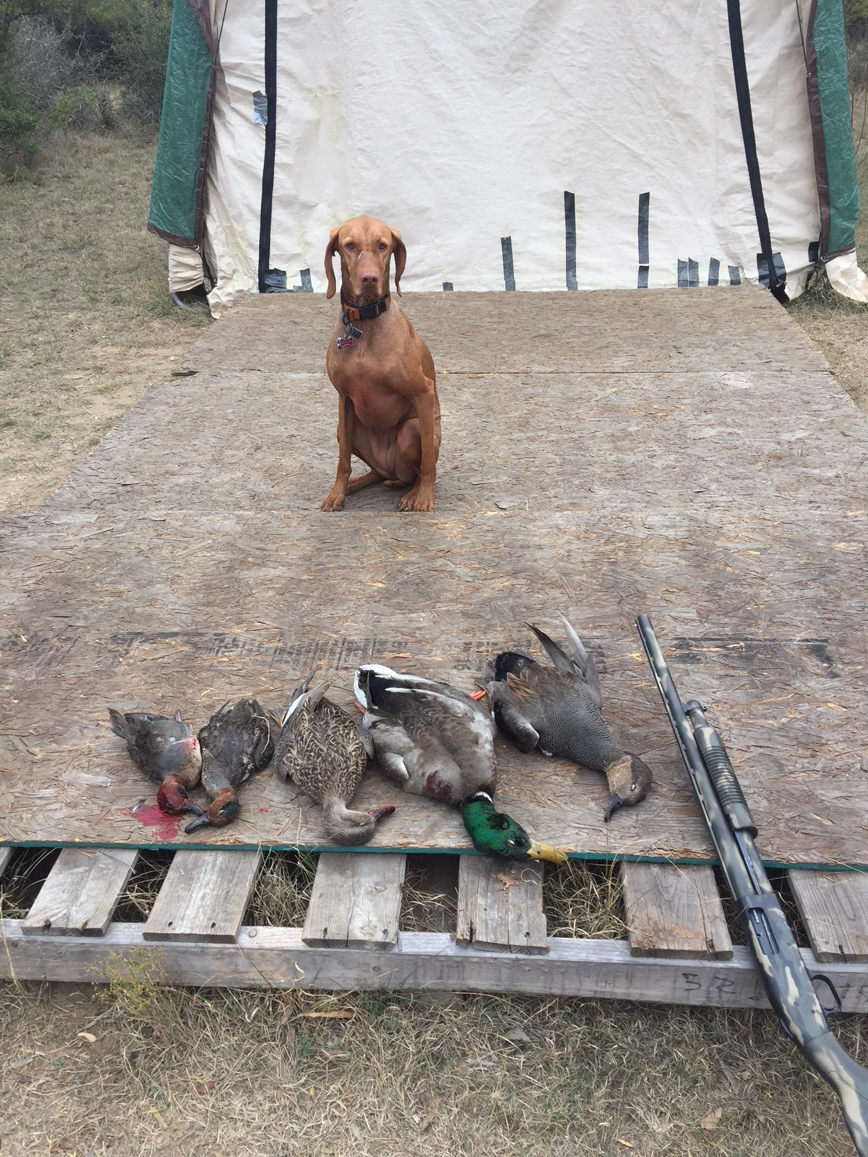 Duck Hunting is ON!